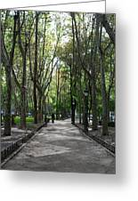 Tall Trees Of Madrid Greeting Card