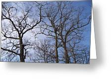 Tall Trees Reaching For A Blue Sky Greeting Card