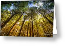 Tall Trees Greeting Card