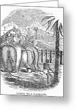 Taming Wild Elephants Greeting Card