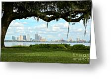 Tampa Skyline Through Old Oak Greeting Card
