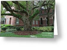 Tampa Tree  Greeting Card