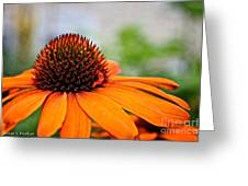Tangerine Summer Greeting Card