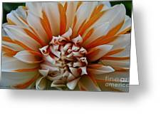 Tangerine Tinged Greeting Card