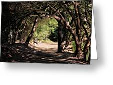 Tangled Arch Greeting Card