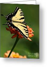 Tantalizing Tiger Swallowtail Butterfly Greeting Card