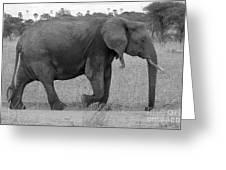 Tarangire Elephant On Road Greeting Card