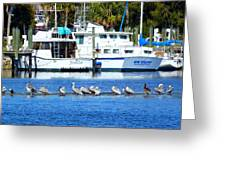 Tarpon Springs Florida Greeting Card