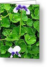 Tasmanian Violets Greeting Card
