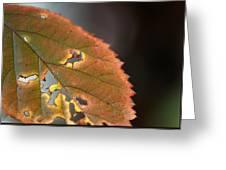 Tattered Leaf Greeting Card