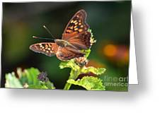 Tawny Emperor Greeting Card