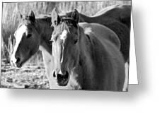 Taylor Horses Greeting Card