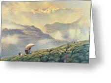 Tea Picking - Darjeeling - India Greeting Card