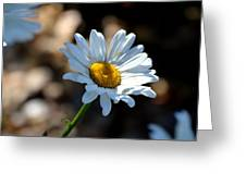 Tea Stained Daisy Greeting Card