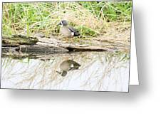 Teal Duck Standing On A Log Greeting Card