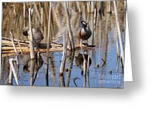 Teal Looking For Something Greeting Card