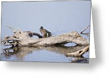 Teal On A Stump Greeting Card