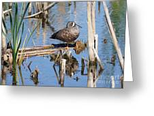 Teal Standing On One Leg Greeting Card