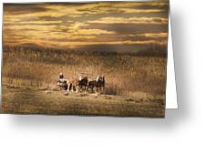 Team Of Four Horses Greeting Card