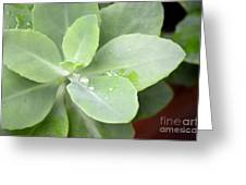 Tears Of Raindrops Greeting Card