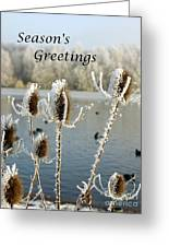 Teasel With Frost Greeting Card