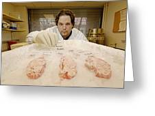 Technician Examines Human Brain Sections Greeting Card