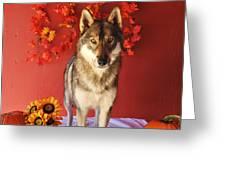 Tehya Greeting Card