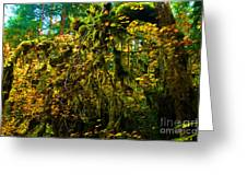 Temperate Rain Forest Greeting Card