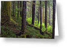 Temperate Rain Forest, Carmanah-walbran Greeting Card