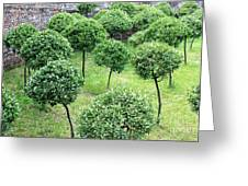 Temple Garden Trees Greeting Card