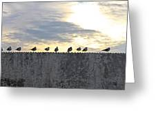 Ten Seagulls Stand On Top Of Stucco Wall Greeting Card