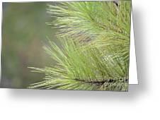 Tender Pines Greeting Card