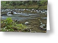 Tennessee Stream 6049 Greeting Card