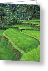 Terraced Fields Of Rice Greeting Card