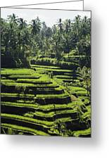 Terraced Rice Fields On Bali Island Greeting Card