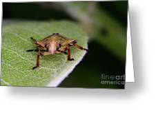Terrestrial Turtle Bug Greeting Card by Ted Kinsman