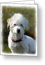 Terrier Dog Portrait Greeting Card