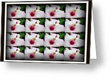 Tessellation Greeting Card