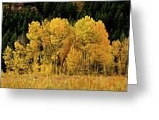 Teton Autumn Foliage Greeting Card