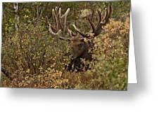 Teton Giant  Greeting Card
