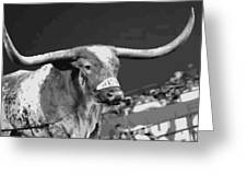 Texas Bevo Bw15 Greeting Card