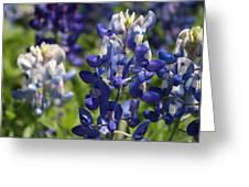 Texas Blue Bonnets Greeting Card