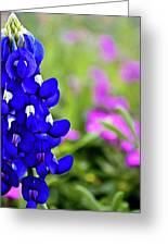 Hill Country Bluebonnet Greeting Card