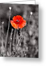 Texas Hot Poppy With Black And White Greeting Card