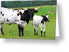 Texas Longhorn Cow And Calf Greeting Card