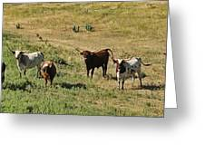 Texas Longhorns Panoramic Greeting Card