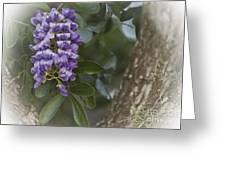 Texas Mountain Laurel Greeting Card