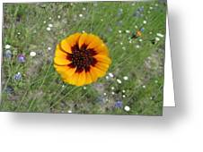 Texas Wildflower Greeting Card
