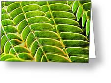 Textural Mimosa Greeting Card