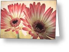 Textured Gerbras Greeting Card